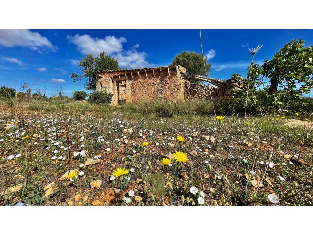 Land with plans and building permission for sale in Son Carrío