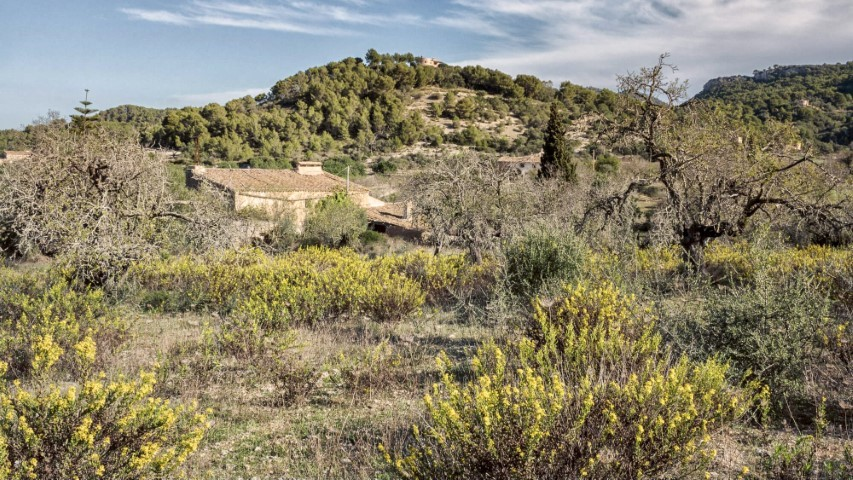 Two Country houses to reform for sale in Es Carritxo, Felenitx